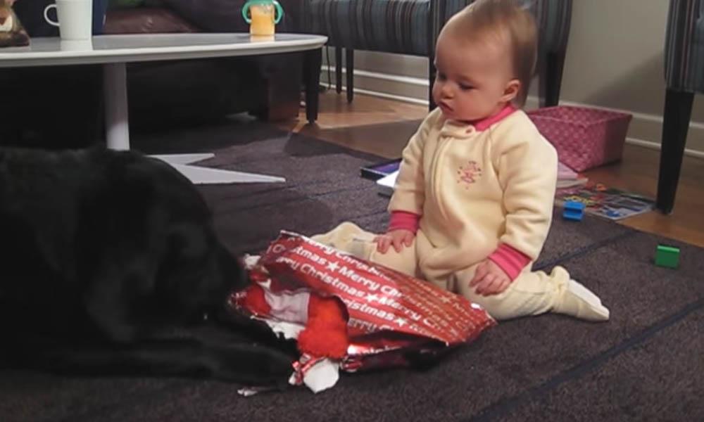 Video: deze hond helpt haar kleine vriendin bij het uitpakken van