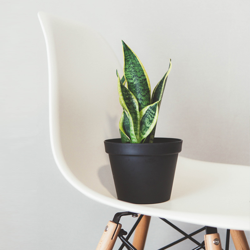 drie replica design stoelen kan jij vandaag nog kopen